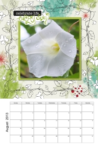 Enchanted Bindweed Flower August 2013