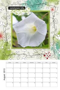 Enchanted Bindweed Flower August 2013