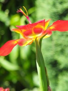 Flower - unsure