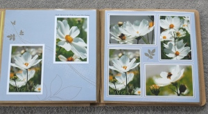 Reflections of Flowers album