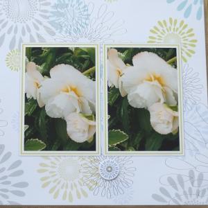 Reflections of Flowers Quick album
